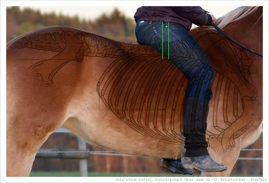 Pferd Reiten Ohne Sattel Beim Reiten Ohne Sattel